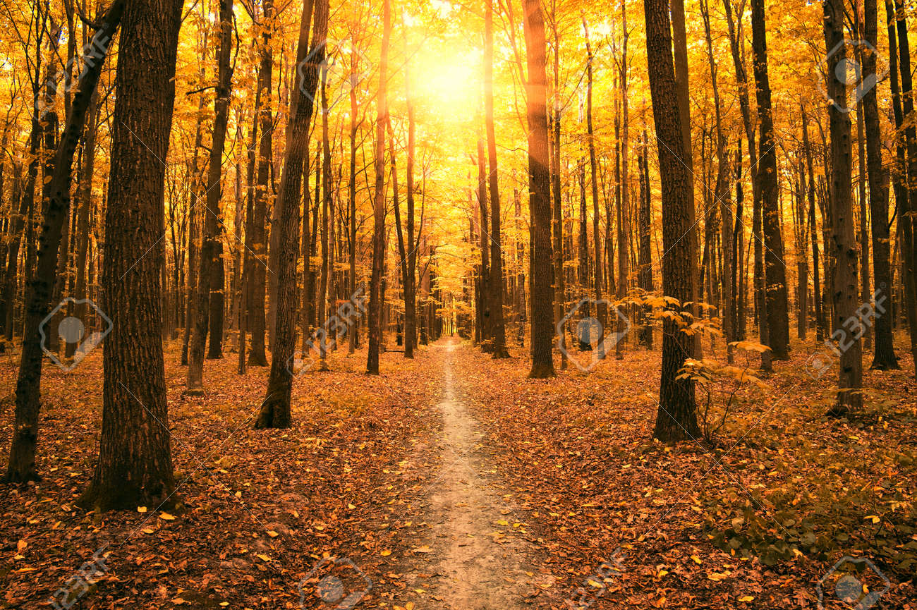 autumn trees in the forest - 46794901