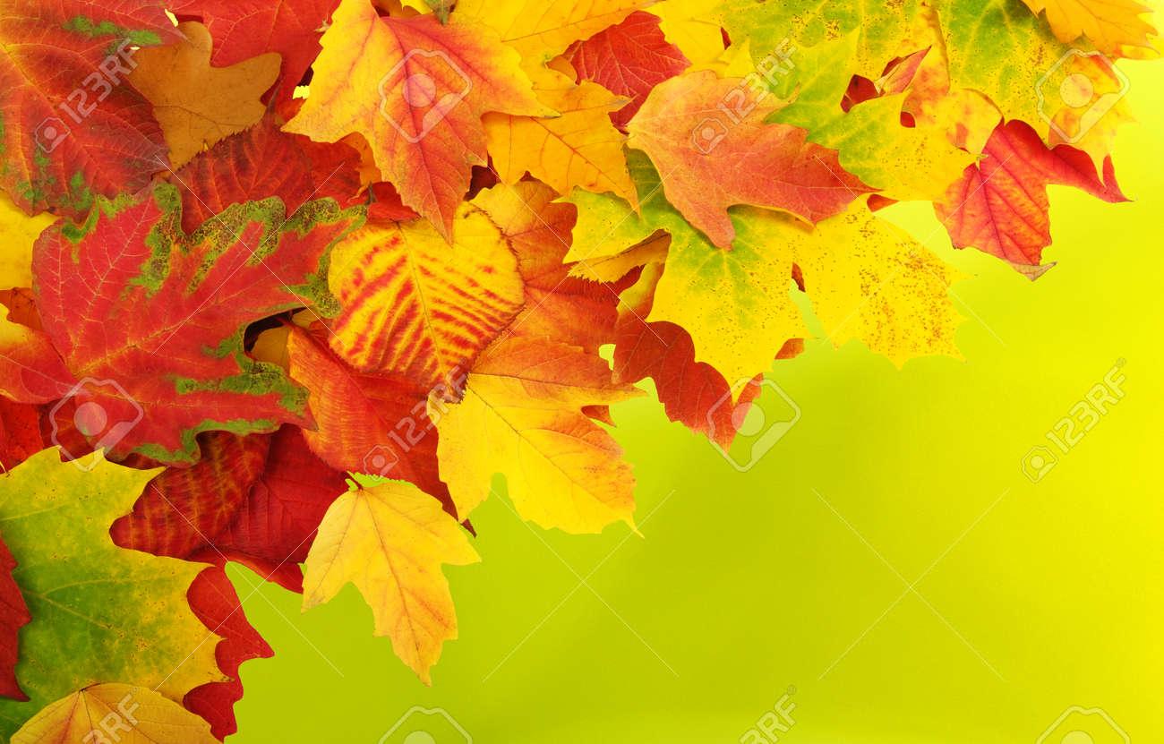 Chute, automne, leaves. Une branche d'arbre avec des feuilles d'automne sur un fond flou Banque d'images - 46794970