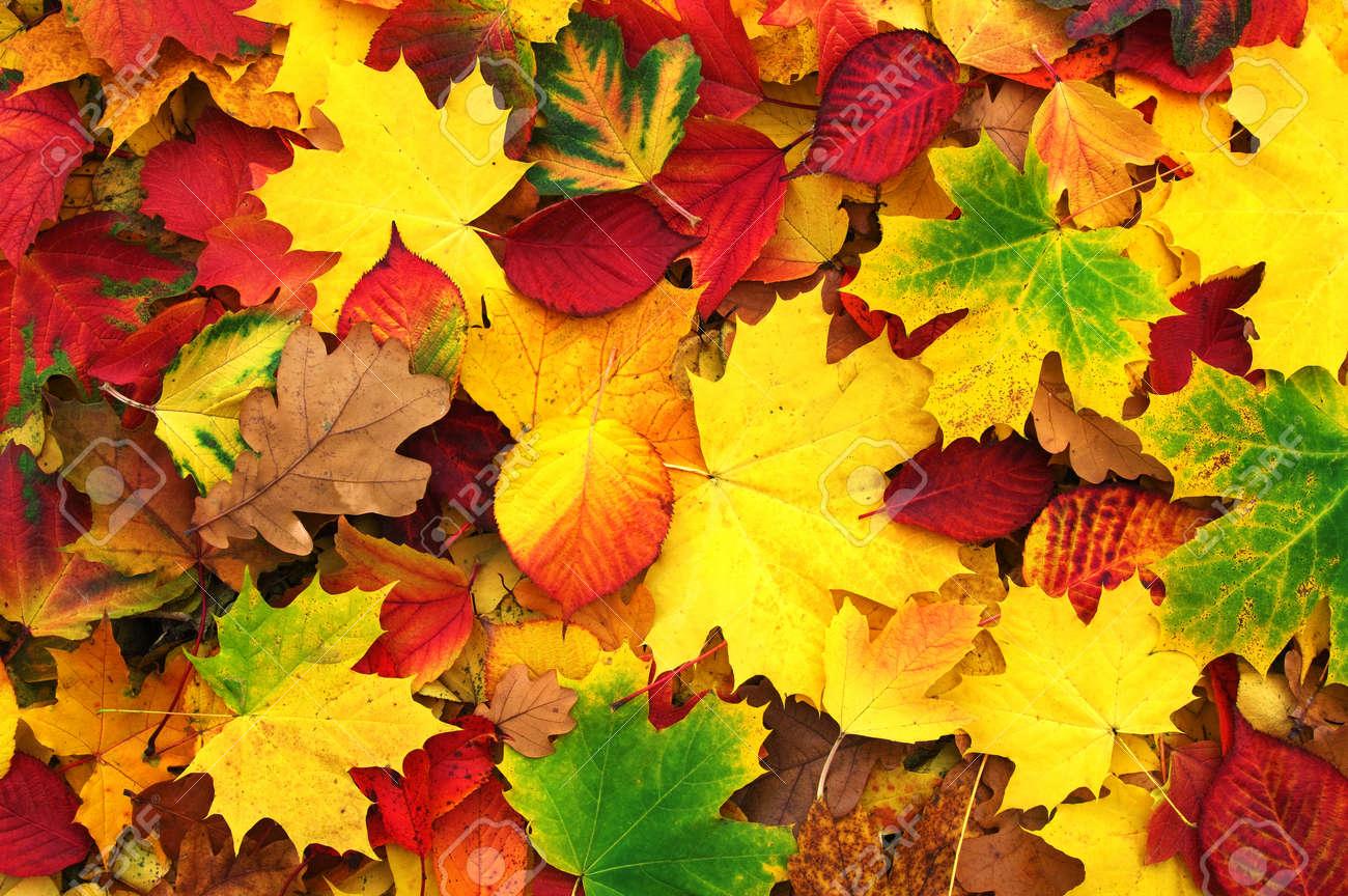 fond de feuilles d'automne tombées Banque d'images - 46795112