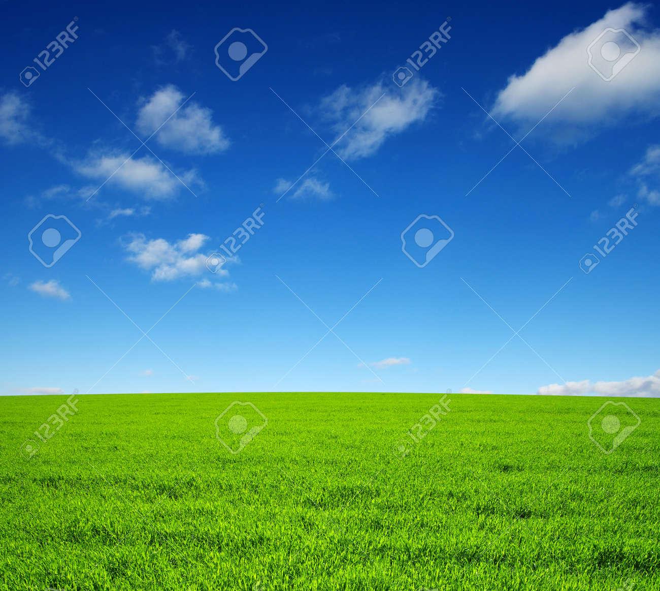 champ d'herbe verte et de ciel Banque d'images - 47832525