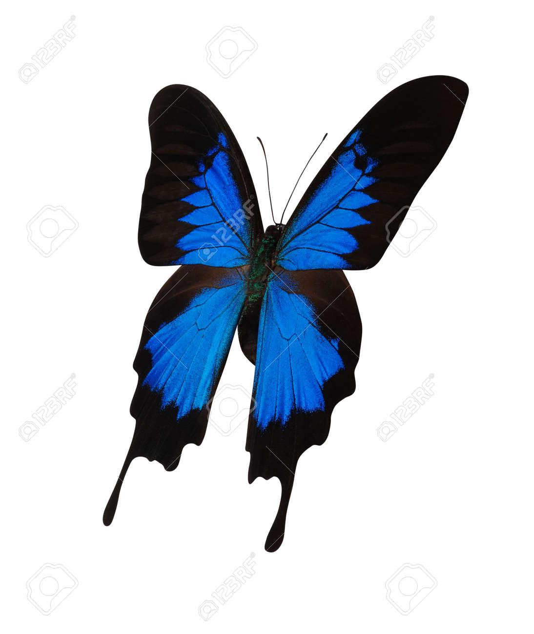 Immagini Stock Farfalla Blu Isolato Su Sfondo Bianco Image 48328168