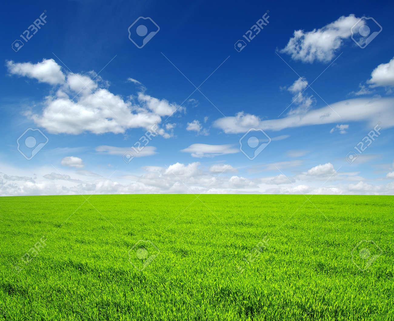 champ d'herbe verte et de ciel Banque d'images - 48653615