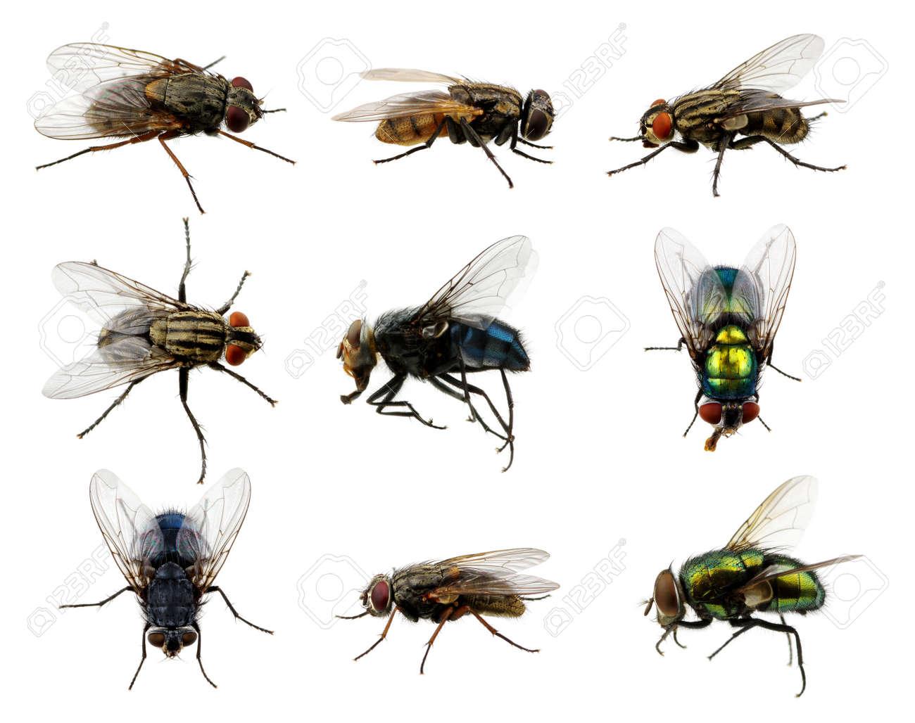Définir des insectes voler sur blanc Banque d'images - 51800746