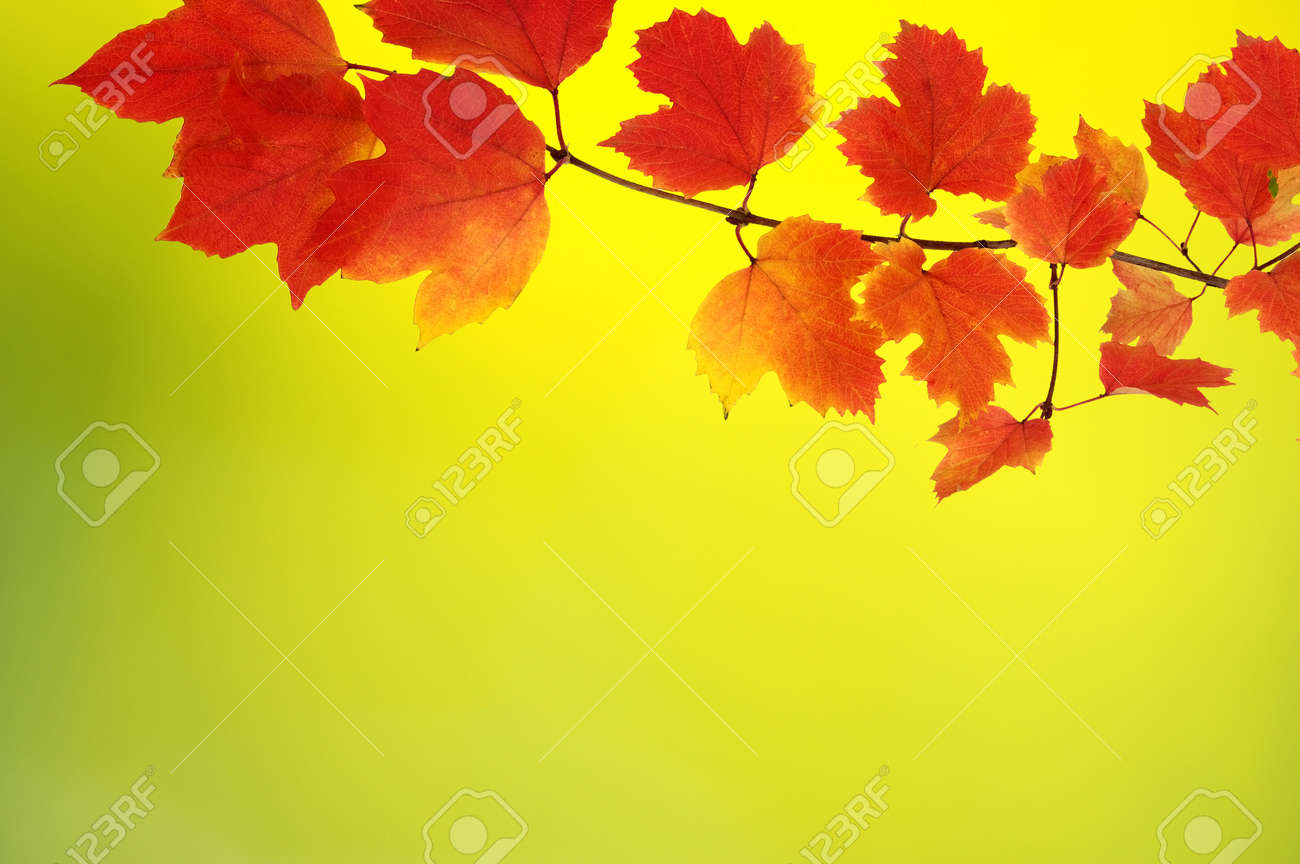fall autumn leaves background a tree branch with autumn leaves