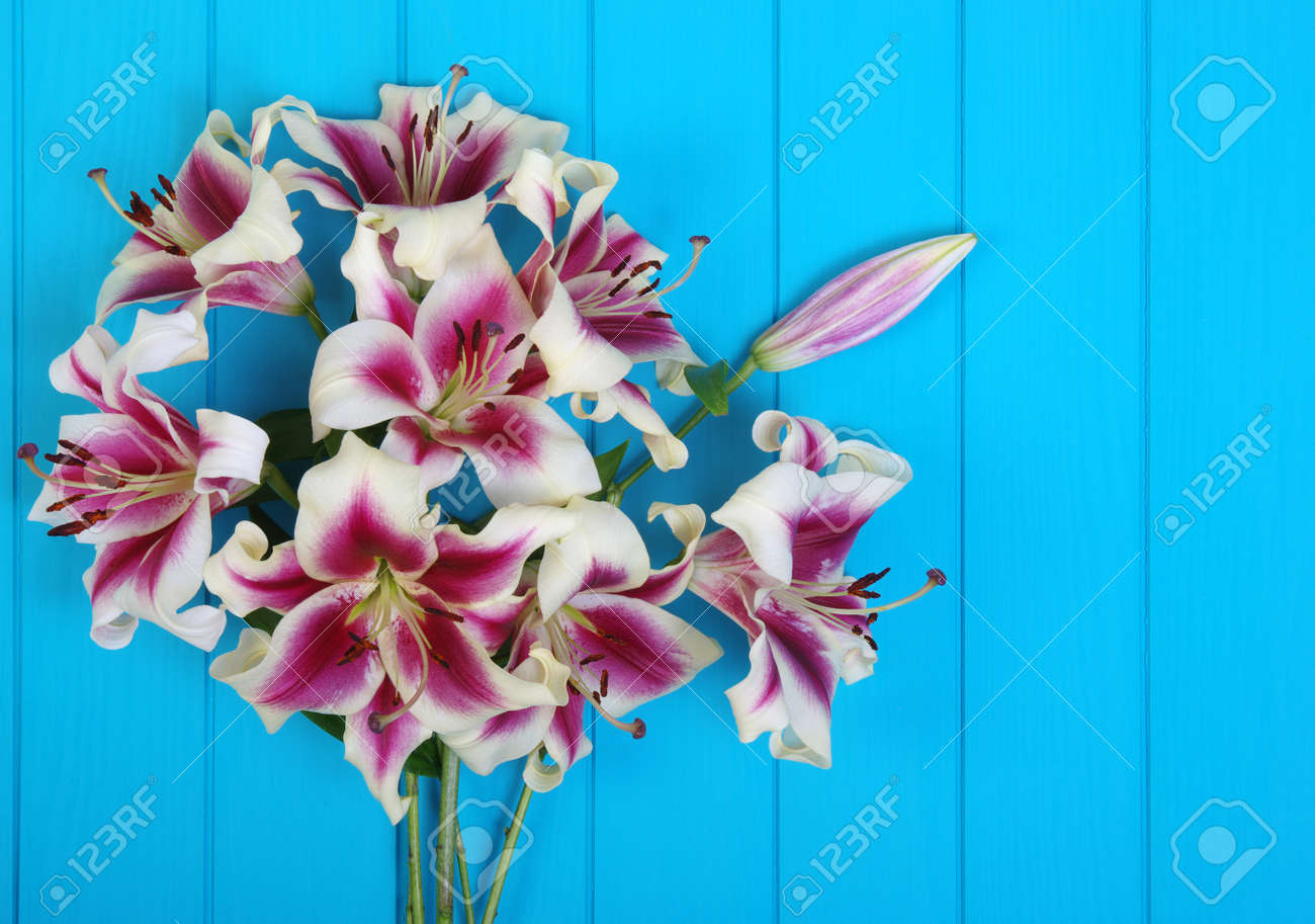 Fresh spring lily flowers on turquoise painted wooden planks stock fresh spring lily flowers on turquoise painted wooden planks stock photo 97826271 izmirmasajfo