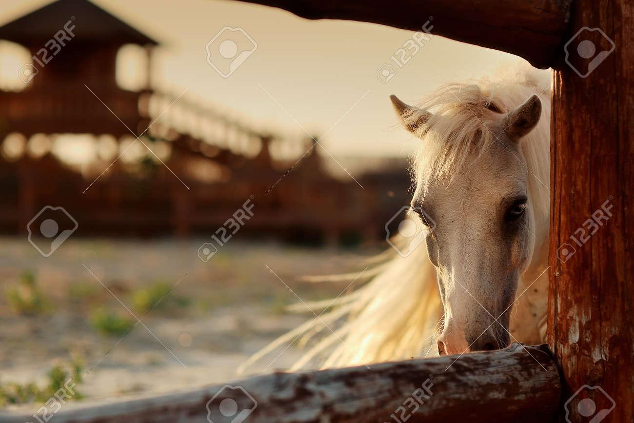 beautiful, quiet, white horse waits in paddock Stock Photo - 14953812