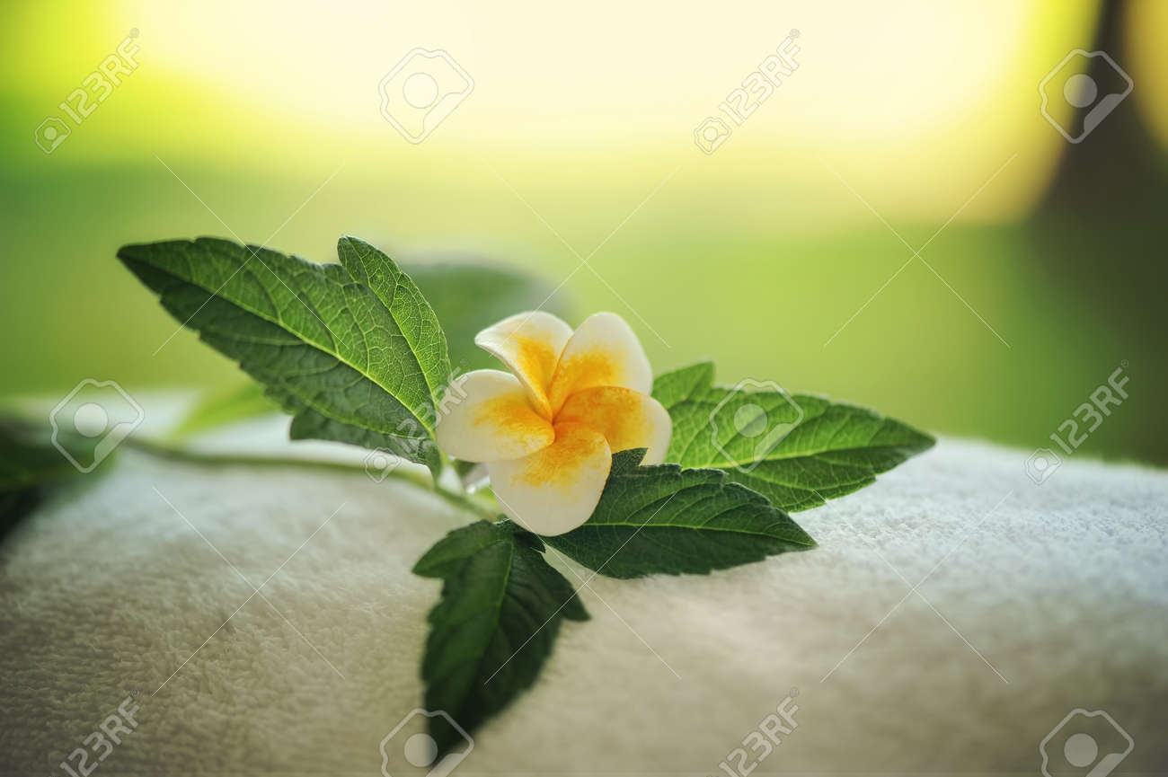 sunset in the background is a close-up flower with green leaves Stock Photo - 17508904