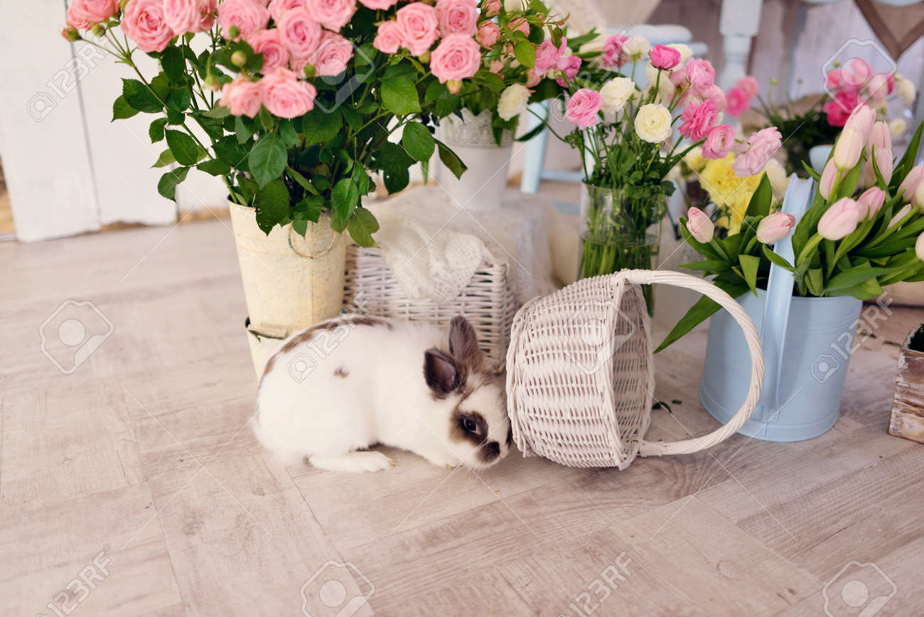 123RF.com & on the floor under large vases with flowers sitting rabbit