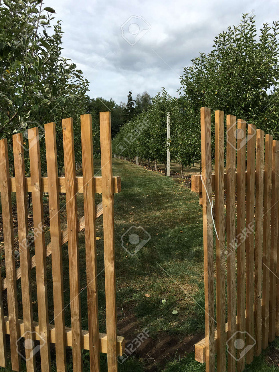 Ajar Wooden Gate Into The Garden With Young Trees Planted In.. Stock ...