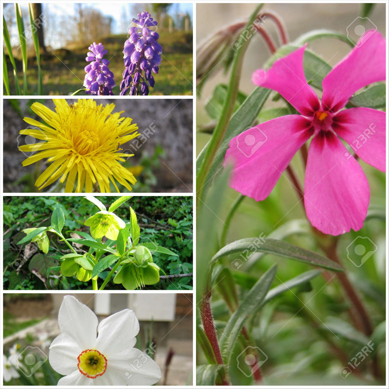 Group of beautifull flowers at spring season stock photo picture group of beautifull flowers at spring season stock photo 20598341 mightylinksfo