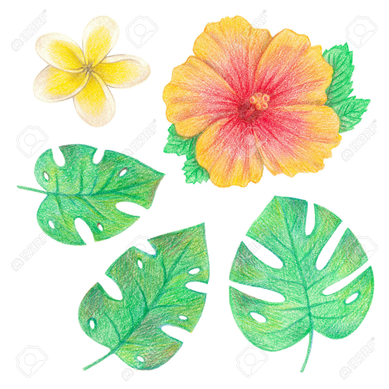 Tropical Exotic Leaves And Flowers Palm Leaves Hibiscus And Stock Photo Picture And Royalty Free Image Image 103764952