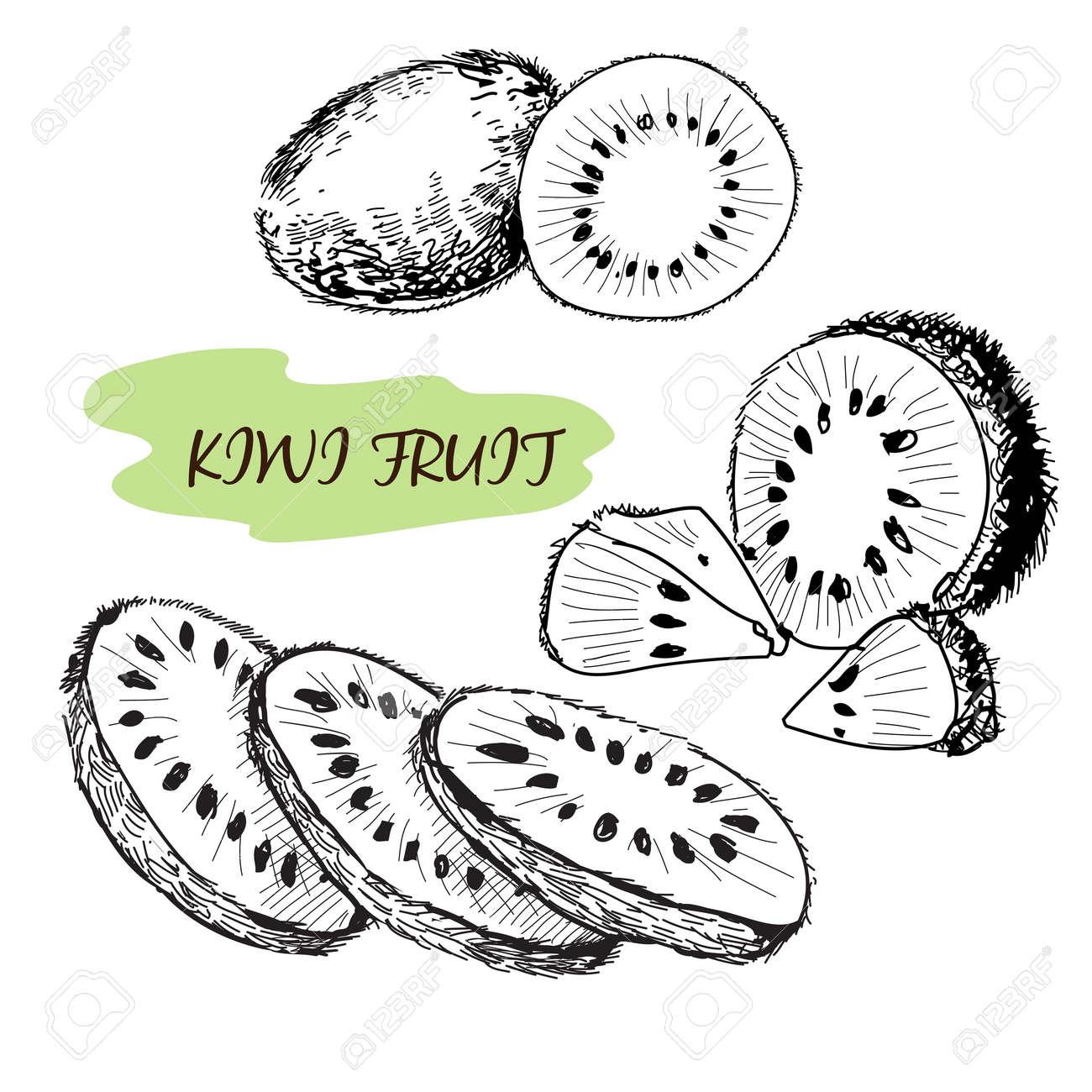 Kiwi Fruit Drawing Kiwi Fruit Set of Hand Drawn