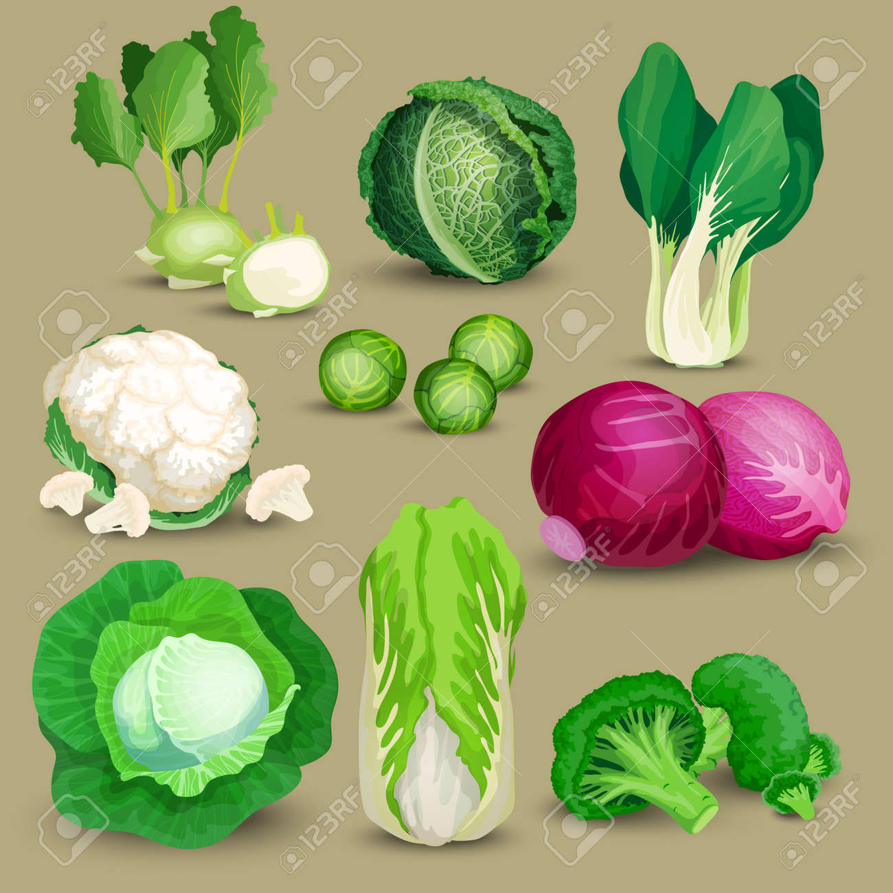 Vegetable set with broccoli, kohlrabi and other different cabbages. Vegetable set with cabbage, broccoli, kohlrabi, savoy, red, chinese, napa and brussels sprouts - 58881920