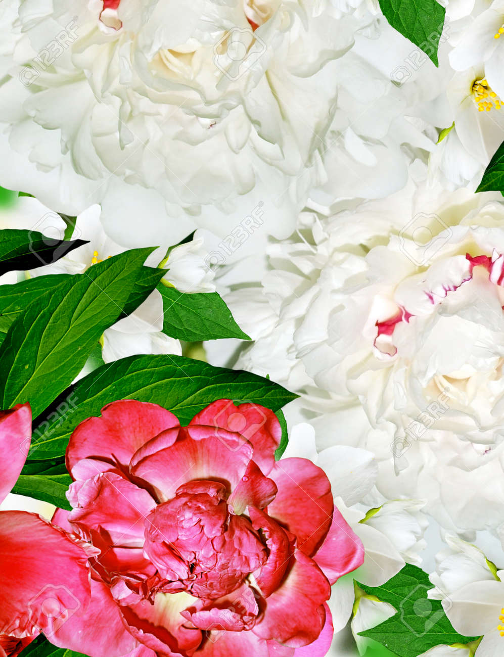 Spring Flowers Peonies And Jasmine Stock Photo Picture And Royalty