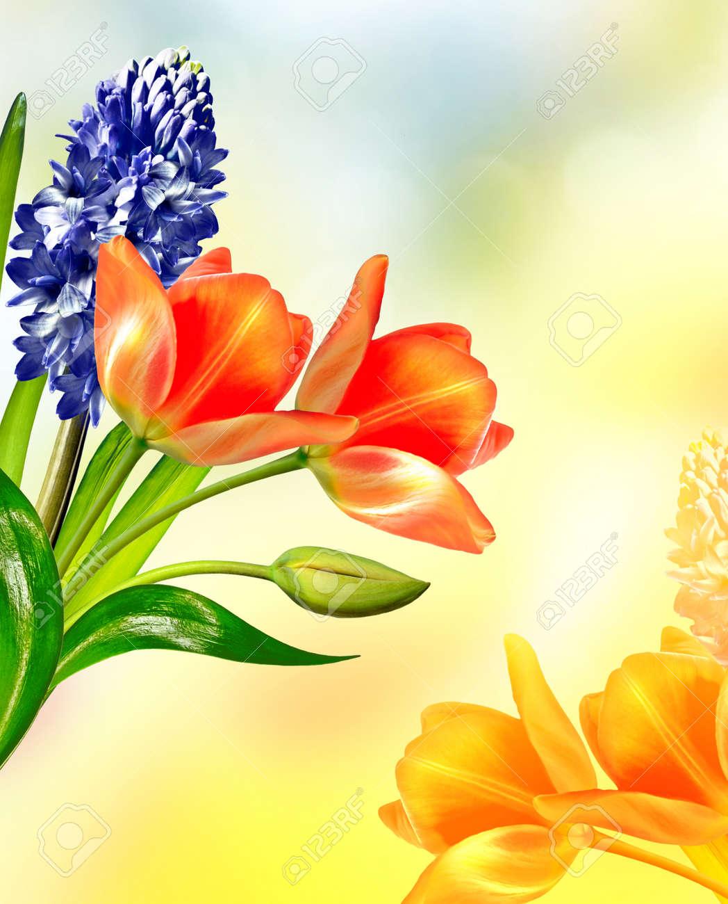 Spring landscape beautiful spring flowers tulip blue hyacinth spring landscape beautiful spring flowers tulip blue hyacinth stok fotoraf 57609762 mightylinksfo