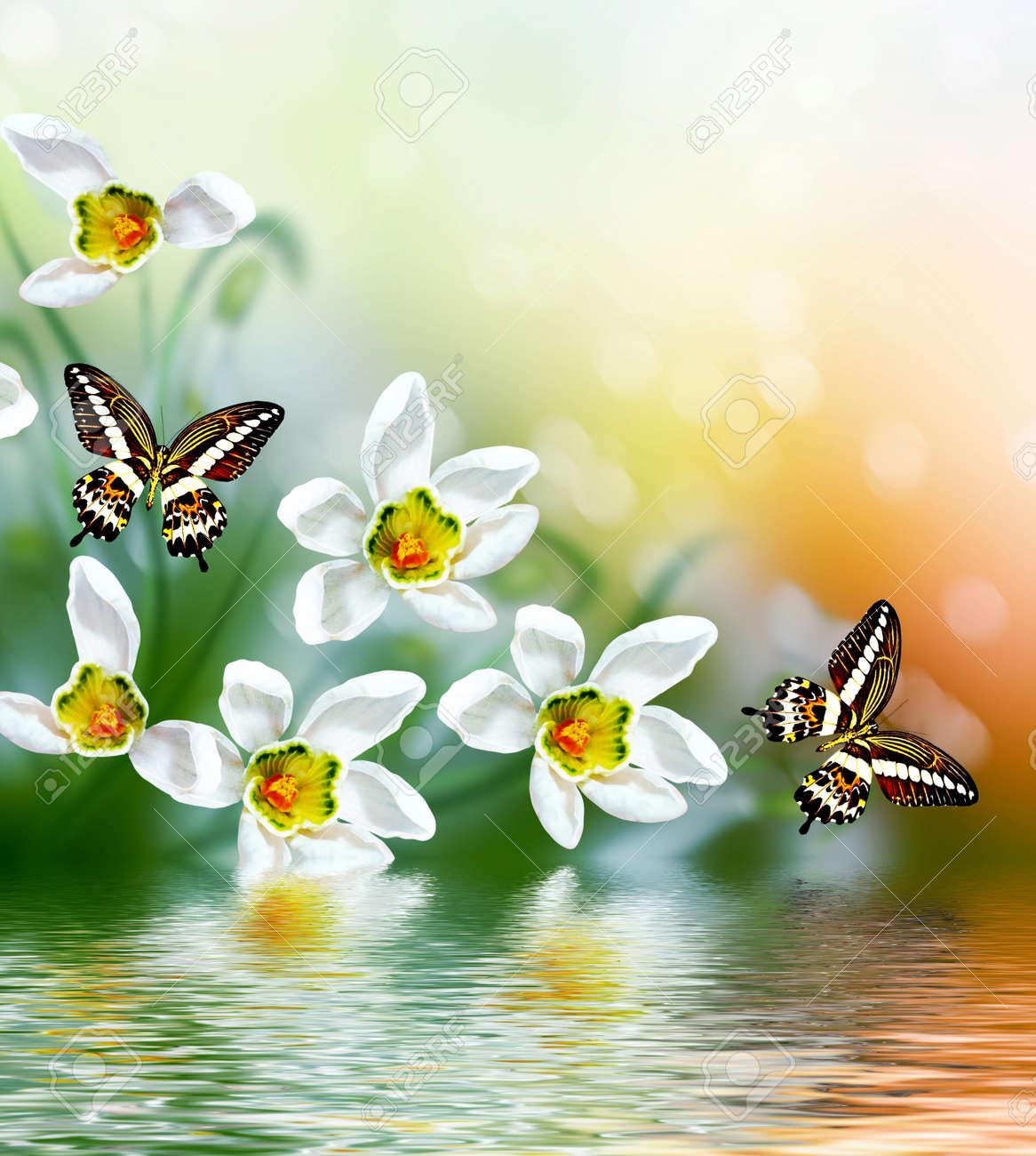 Spring Landscape Flowers Snowdrops Delicate Spring Flower Stock