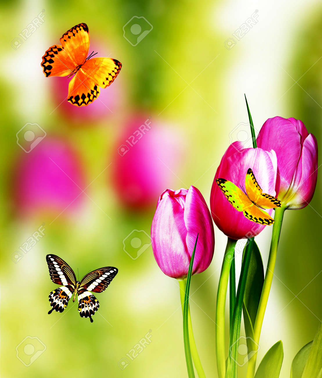 Spring Landscape Beautiful Spring Flowers Tulip Butterfly Stock