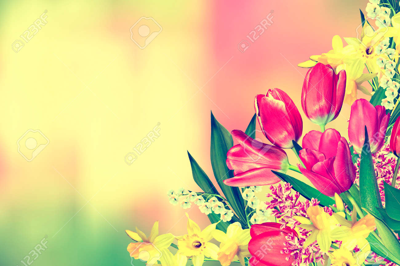 Spring Flowers Daffodils And Tulips Holiday Card Stock Photo