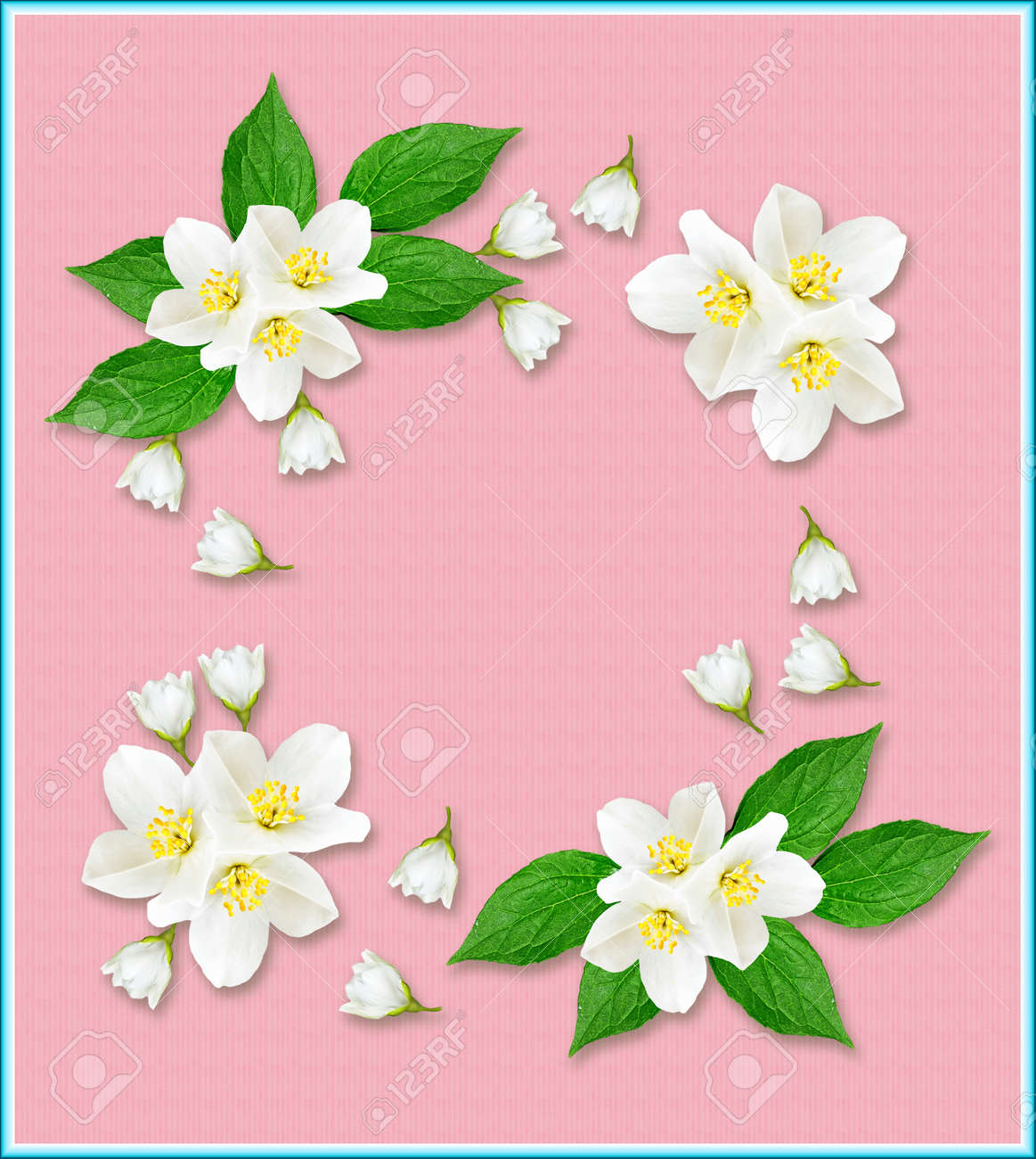 Branch Of Jasmine Flowers Isolated On Pink Background Stock Photo