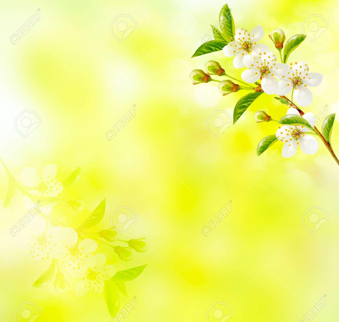 Blossoming Branche Cerise Lumineux Fleurs Printanieres Colorees
