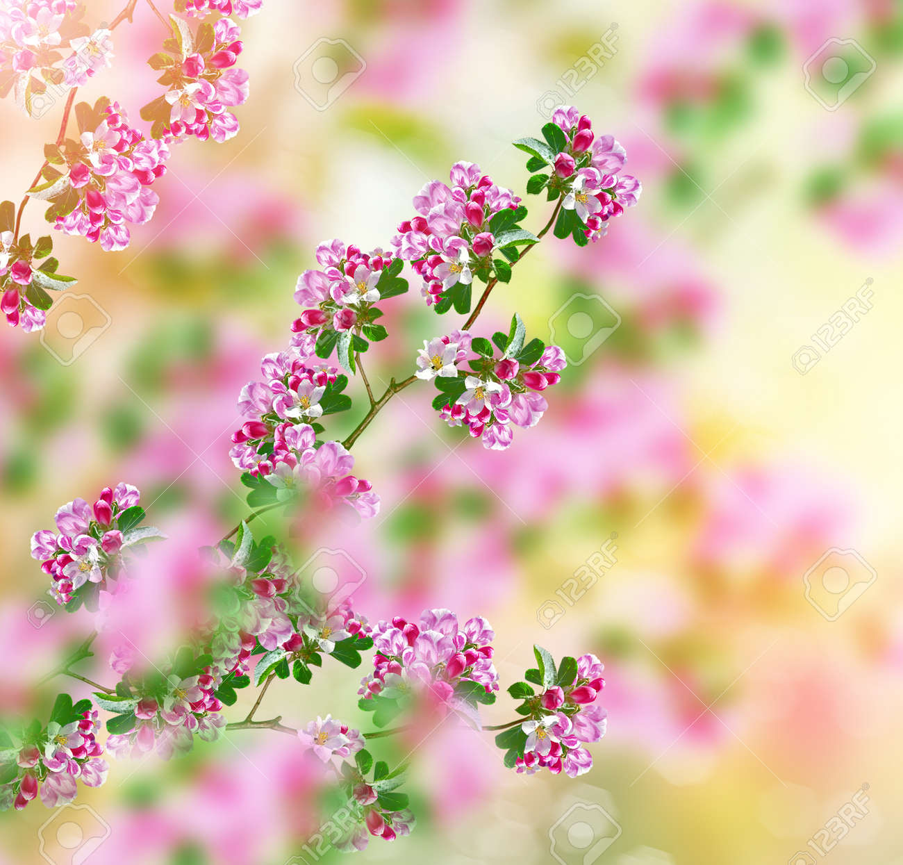 Blossoming Branche Pomme Lumineux Fleurs Printanieres Colorees
