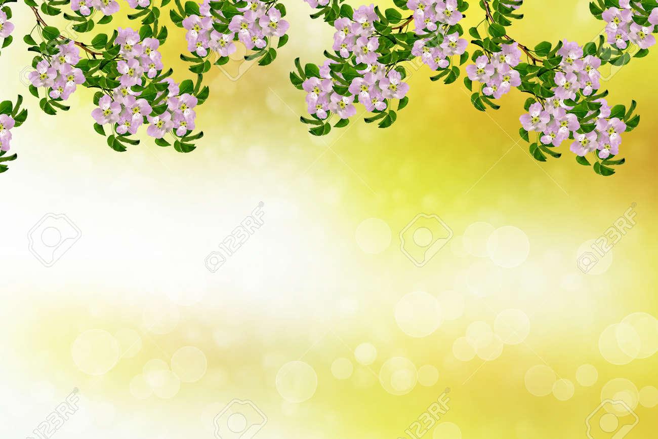 Contexte Naturel Flore Fleurie Branche Fleurs De Printemps