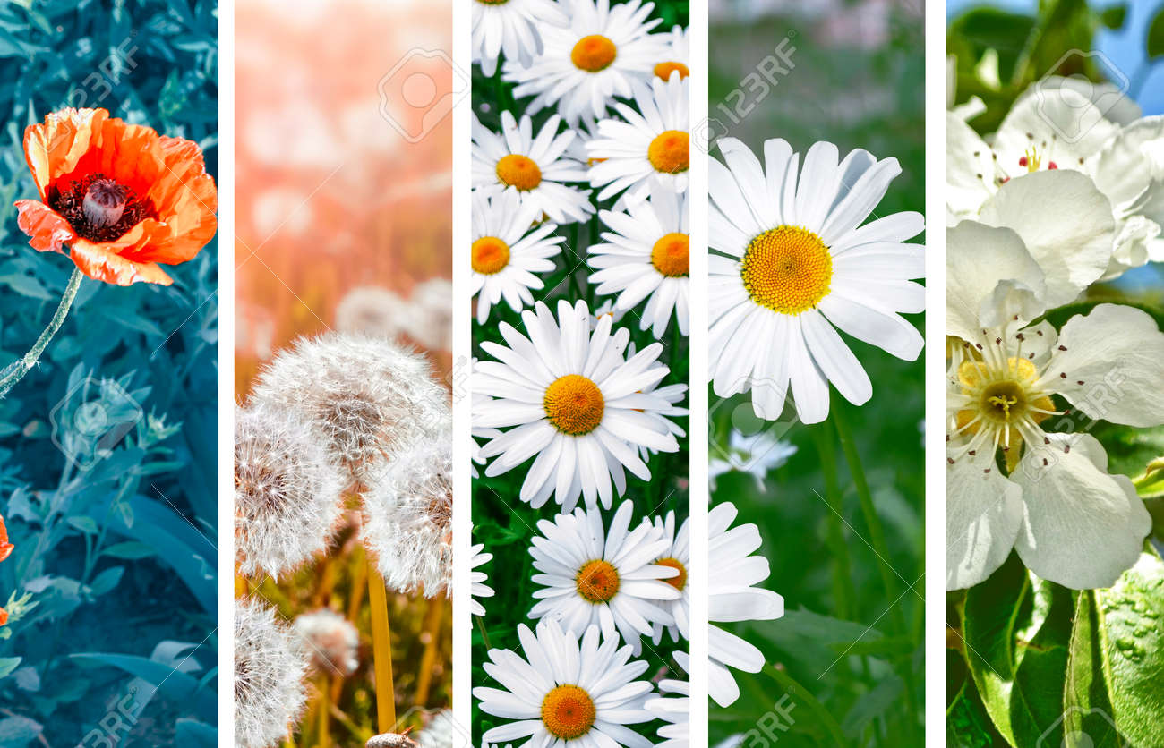 Collage Of Bright Colorful Spring Flowers Sets Stock Photo Picture