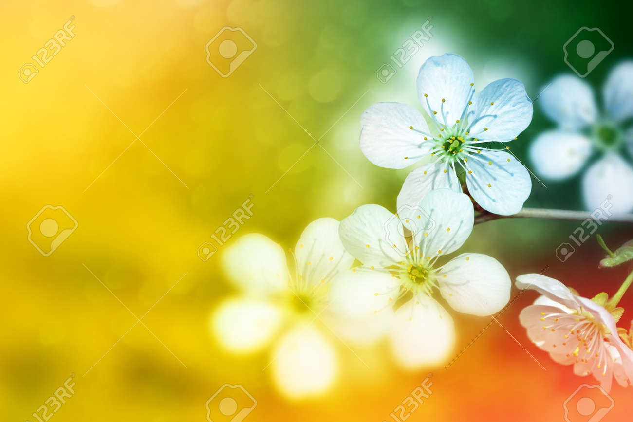 Blossoming Branch Apple Bright Colorful Spring Flowers Stock Photo