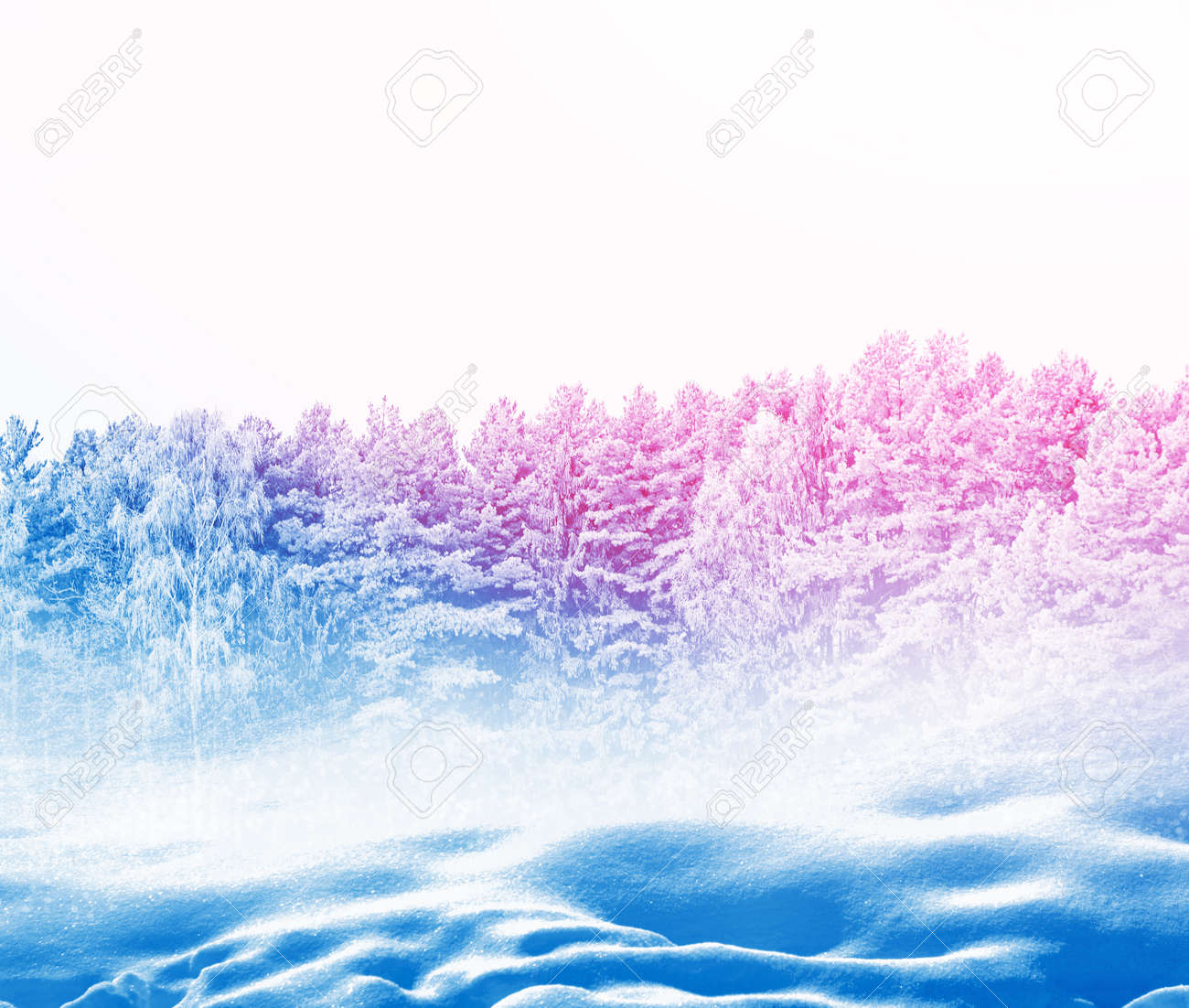 Frozen winter forest with snow covered trees. - 124933984