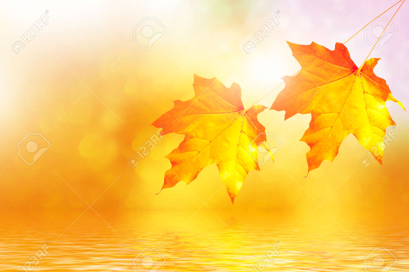 autumn landscape with bright colorful leaves. Indian summer. nature - 129236816