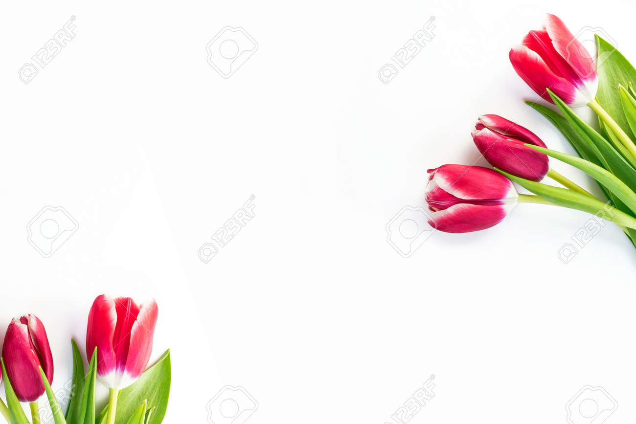 spring flowers tulips isolated on white background. - 139625587