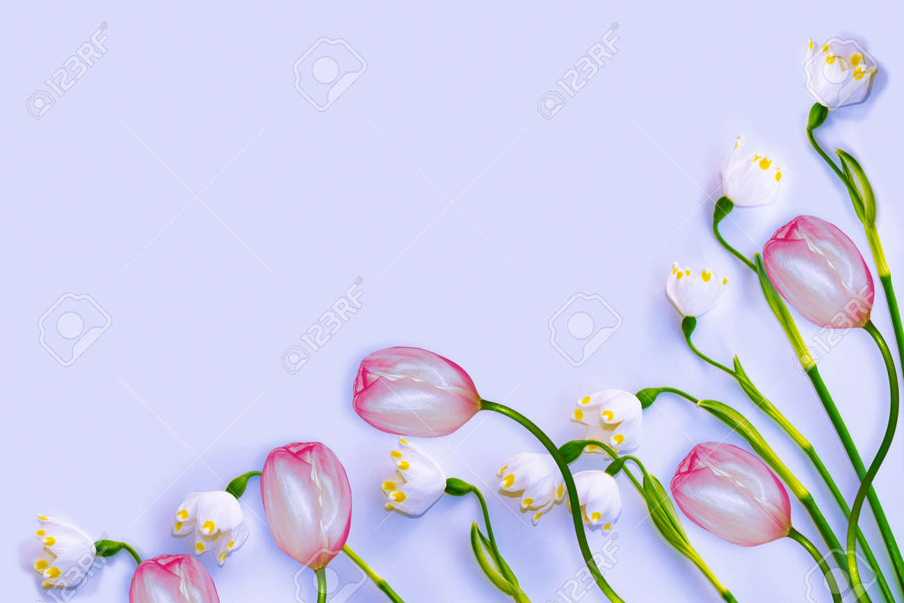 Natural floral background from spring flowers of snowdrops. tulips - 142192169