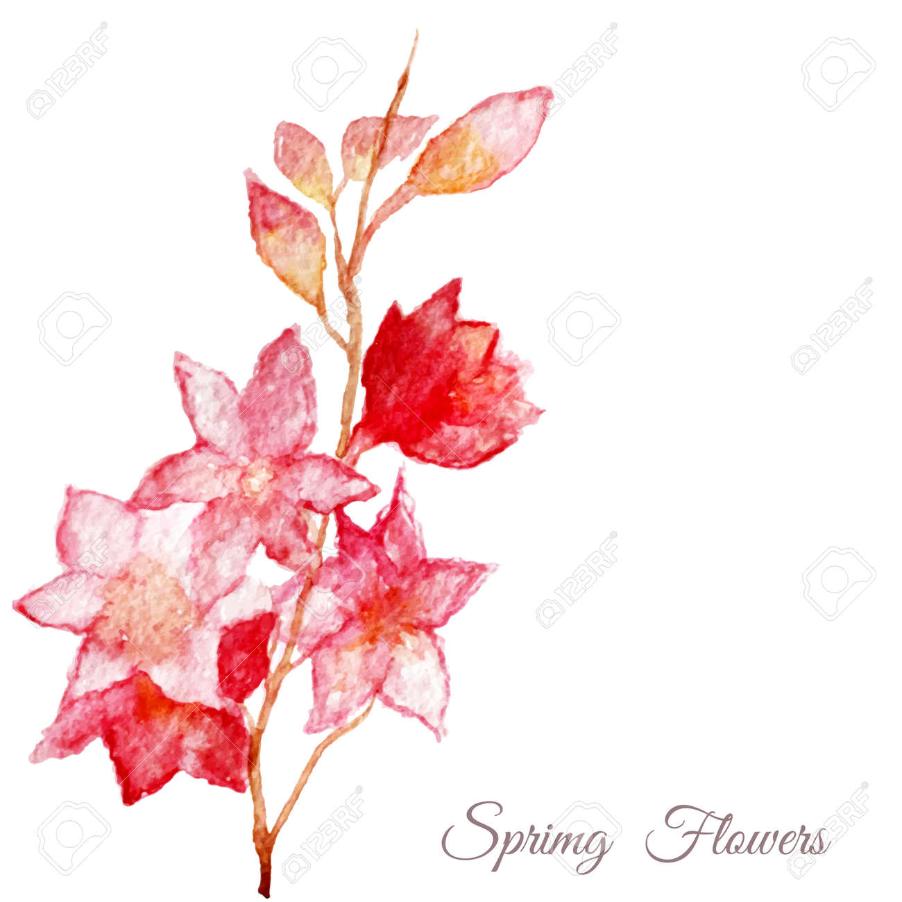 Vecteur Arbre Rose De Pomme Sakura Fleurs De Cerisier Dessin