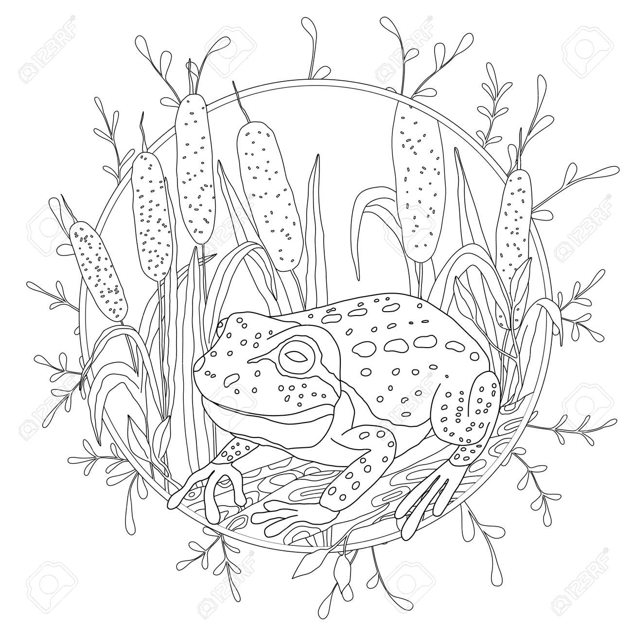 A Stylized Frog Sits Among The Reeds Sketch For Adult Anti Stress Coloring Stock