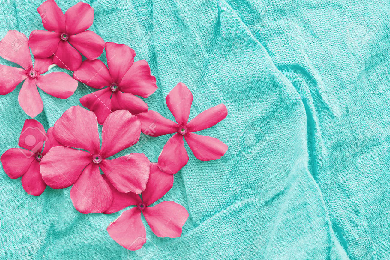 Pink flowers on aqua blue background stock photo picture and pink flowers on aqua blue background stock photo 22669330 mightylinksfo