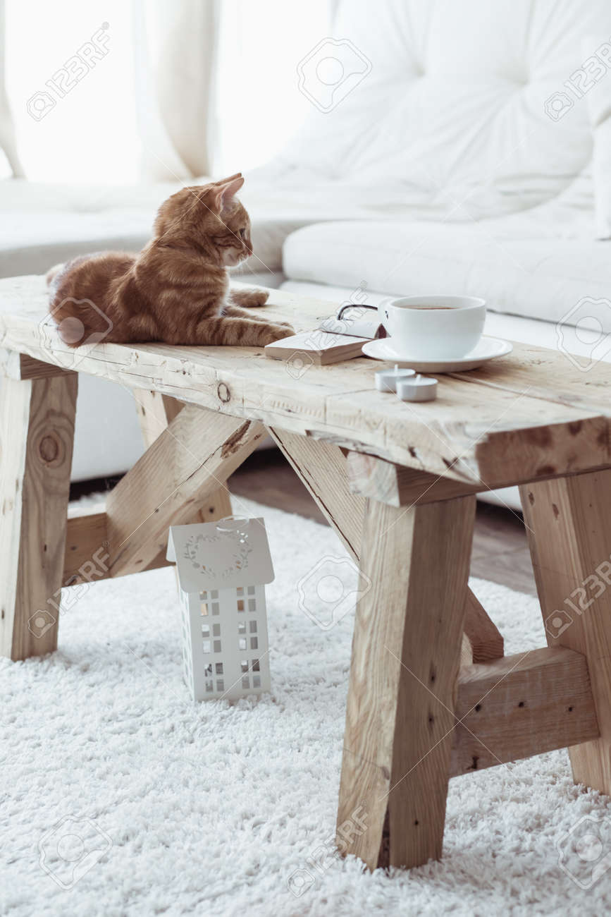 Still Life Details, Cup Of Coffee On Rustic Bench And A Cat Lying Down On