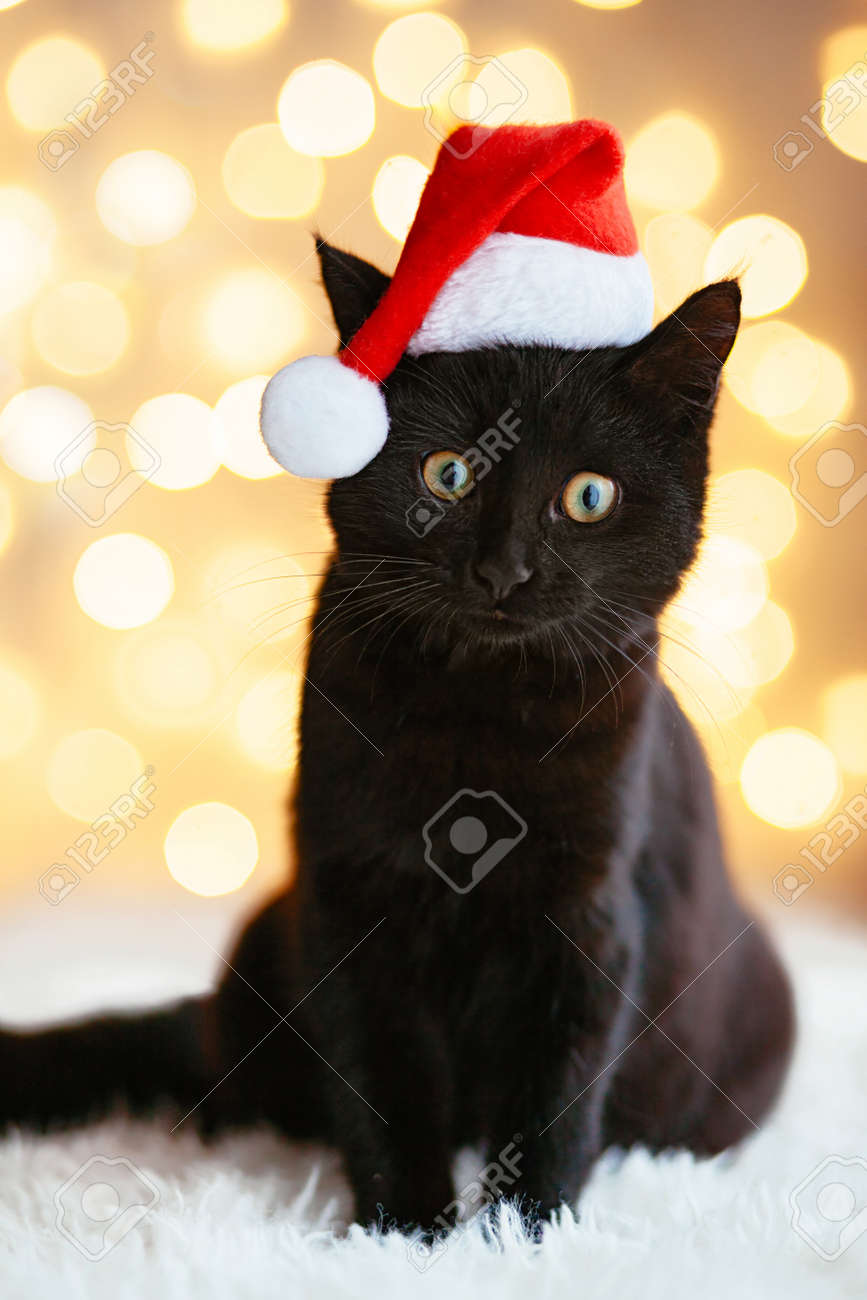 Cat Christmas.Black Cat In Santa Hat Sitting Over Holiday Lights Pet S Christmas