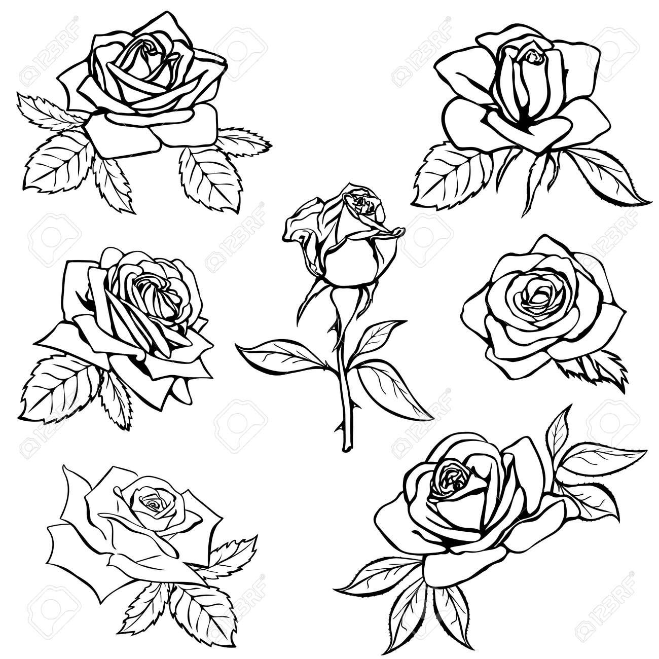 Set Rose sketch. Black outline on white background. Vector illustration. - 36437290