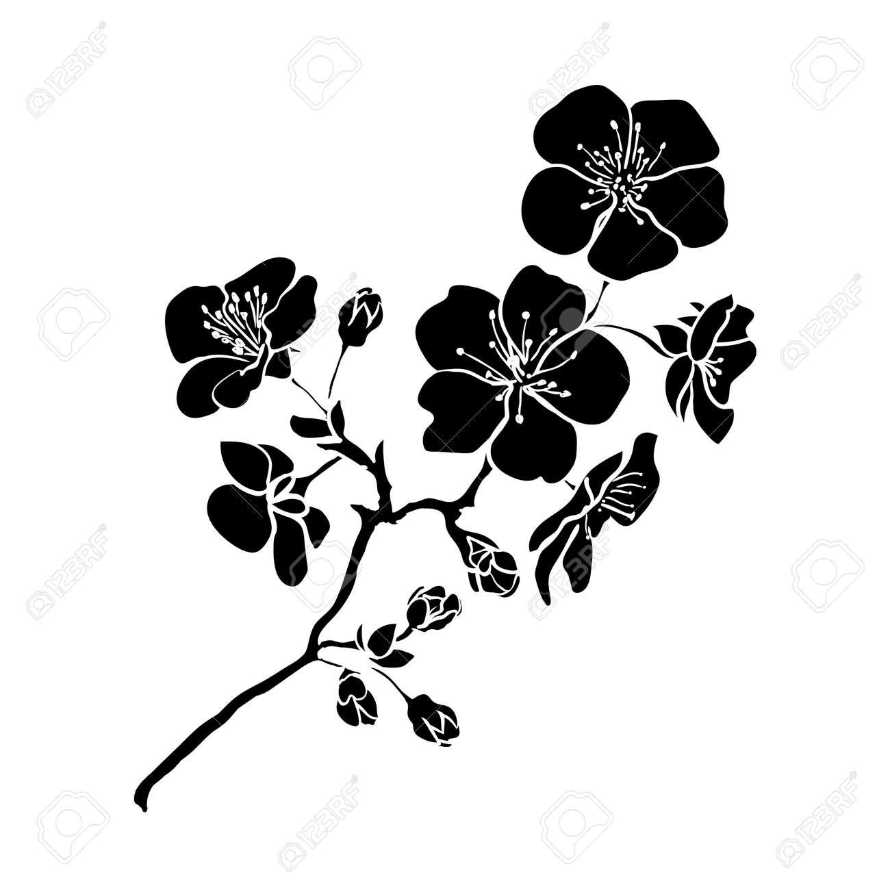twig sakura blossoms. Vector illustration. Black outline - 37747514