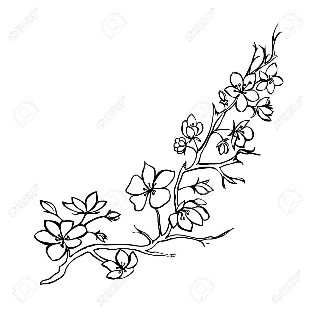 Sketch. Twig sakura blossoms . Vector illustration - 38621152