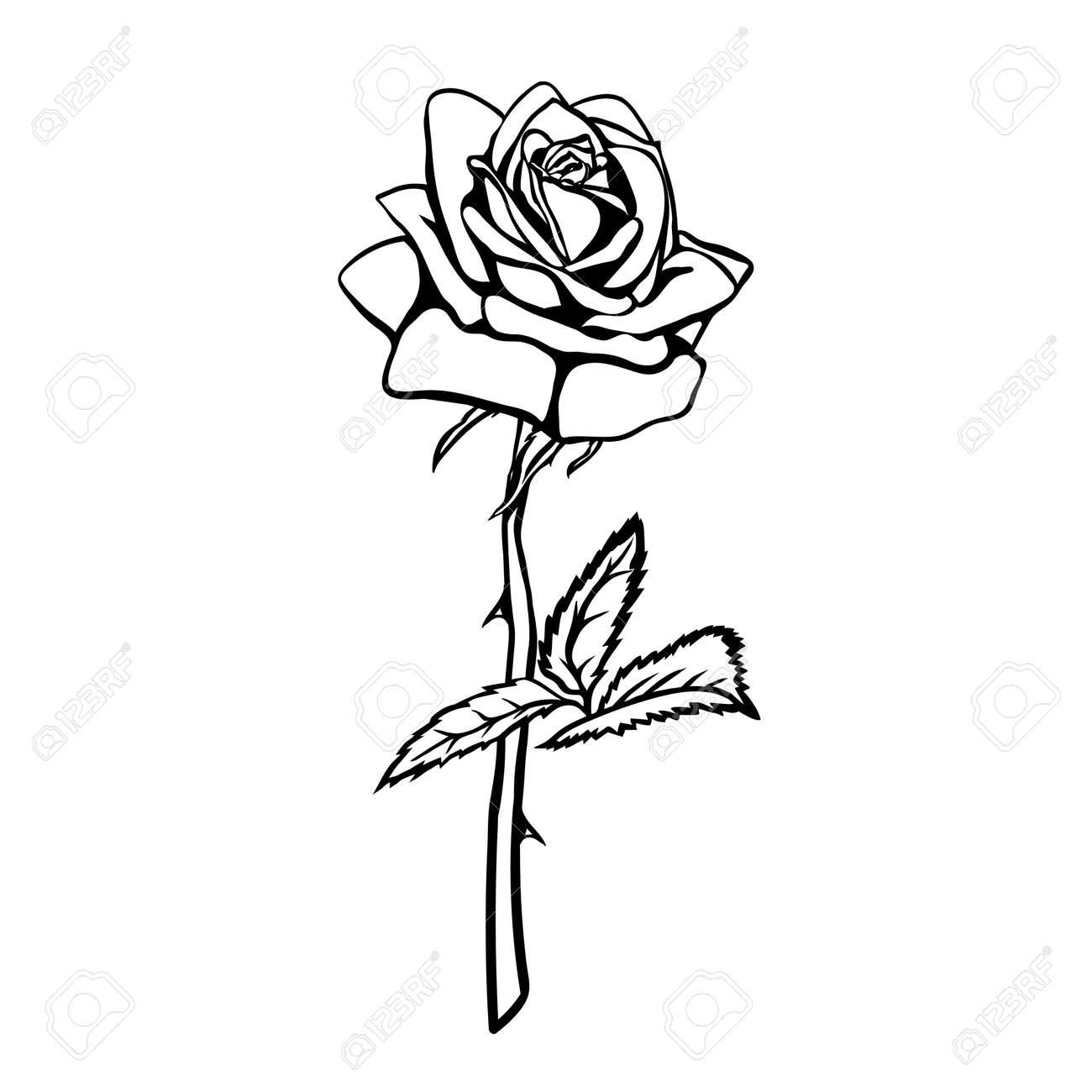 Rose Sketch Black Outline On White Background Vector Illustration