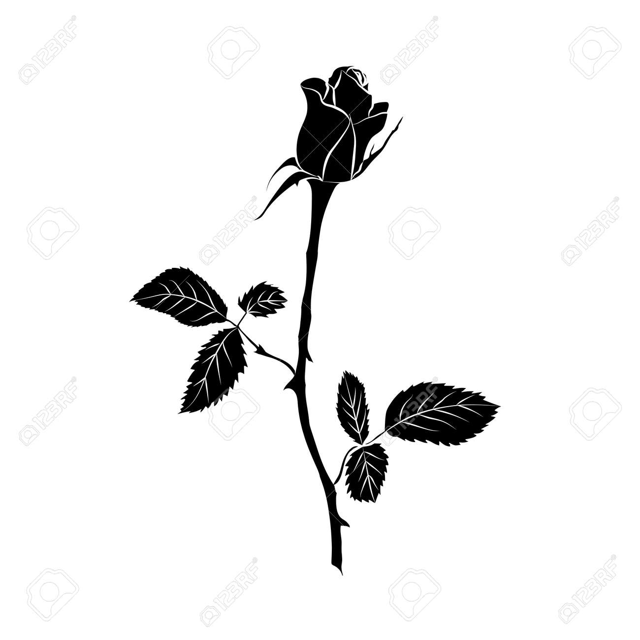 silhouette of rose isolated on white background. Vector illustration. - 41062670