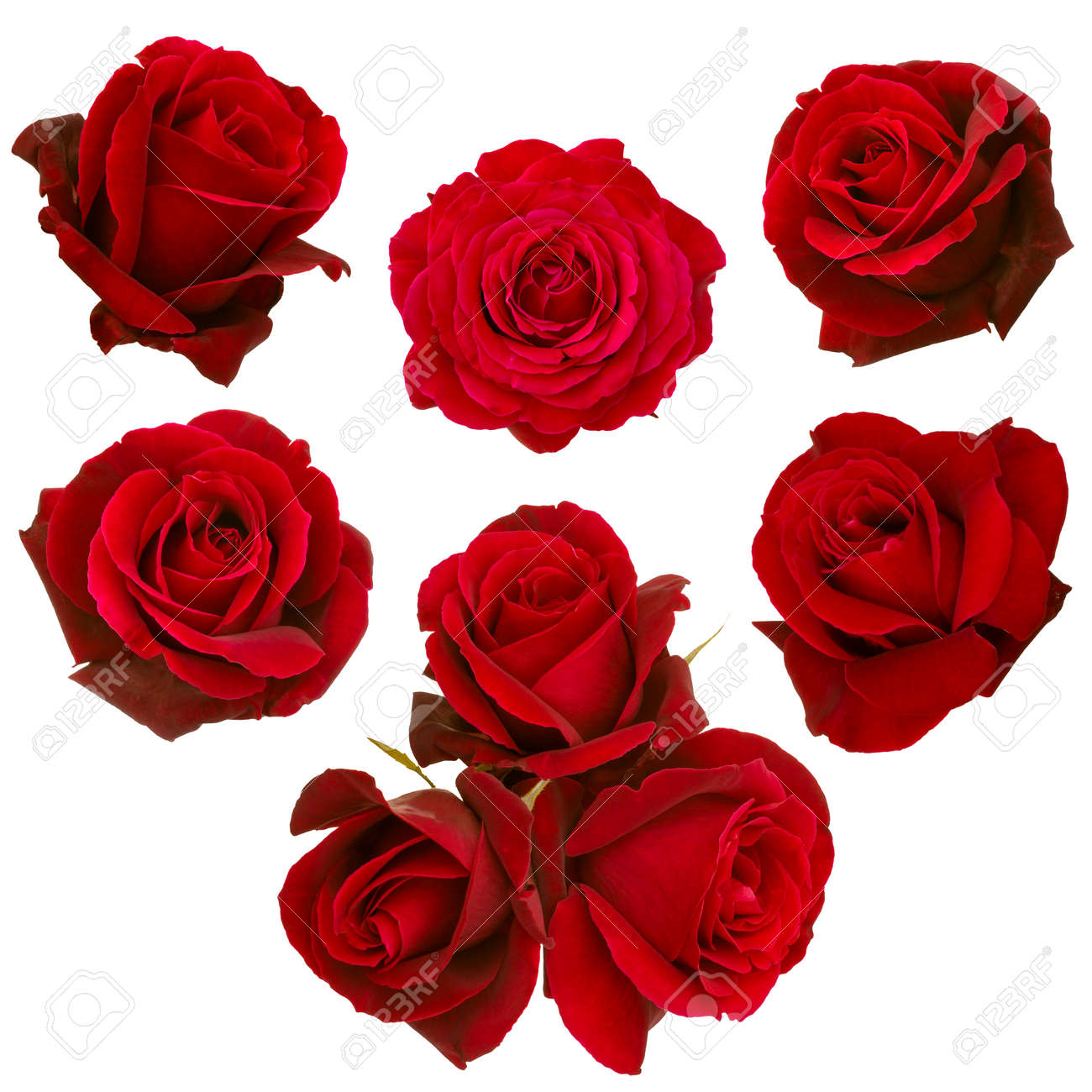 collage of red roses isolated on white background - 51550920