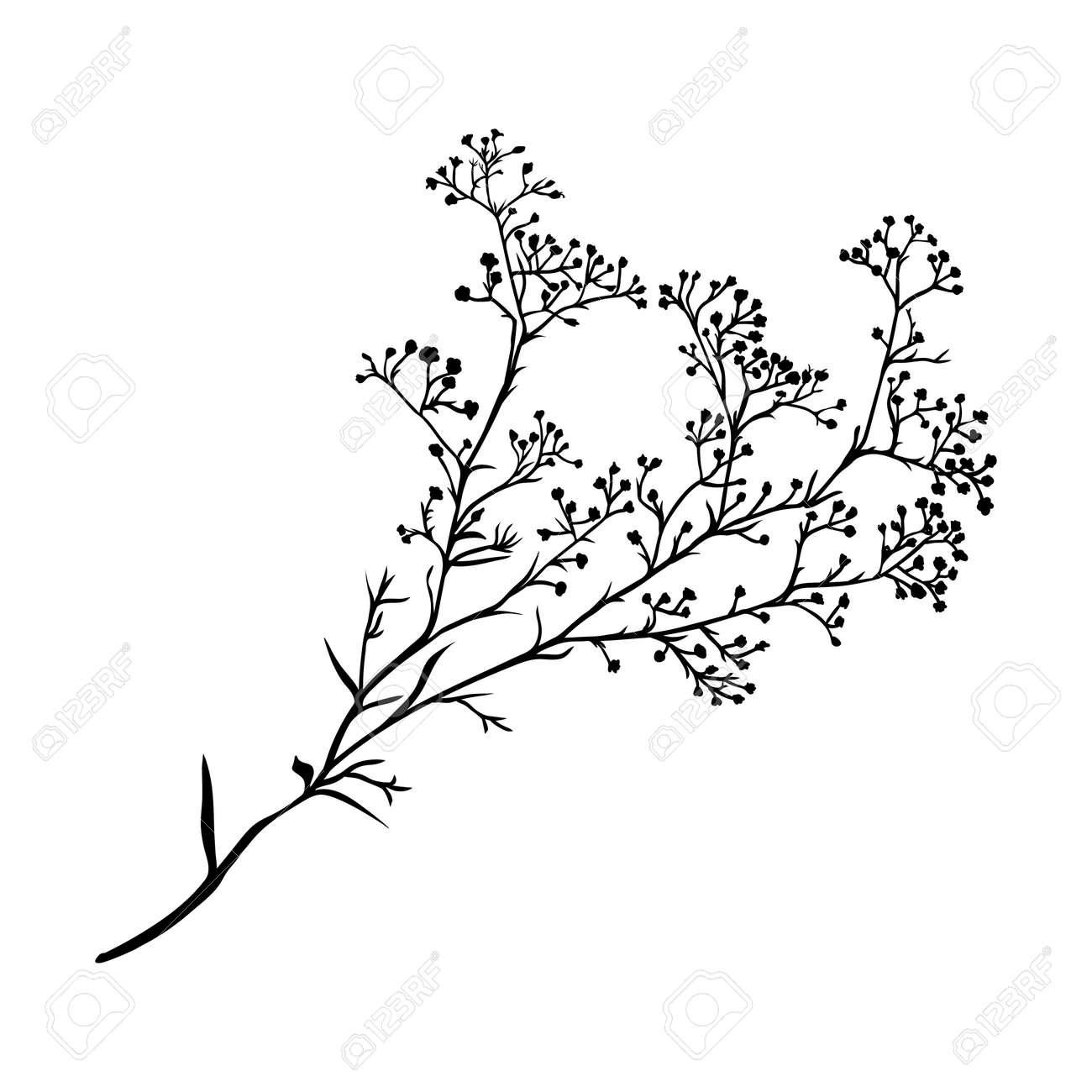 黒と白の色で手描きの美しいシルエット シュッコンカスミソウの支店