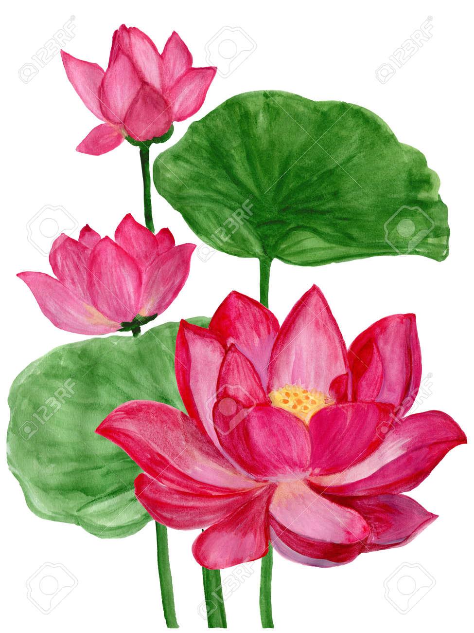 Hand drawn watercolor botanical illustration of lotus flower stock hand drawn watercolor botanical illustration of lotus flower pink stock illustration 74393678 izmirmasajfo Gallery