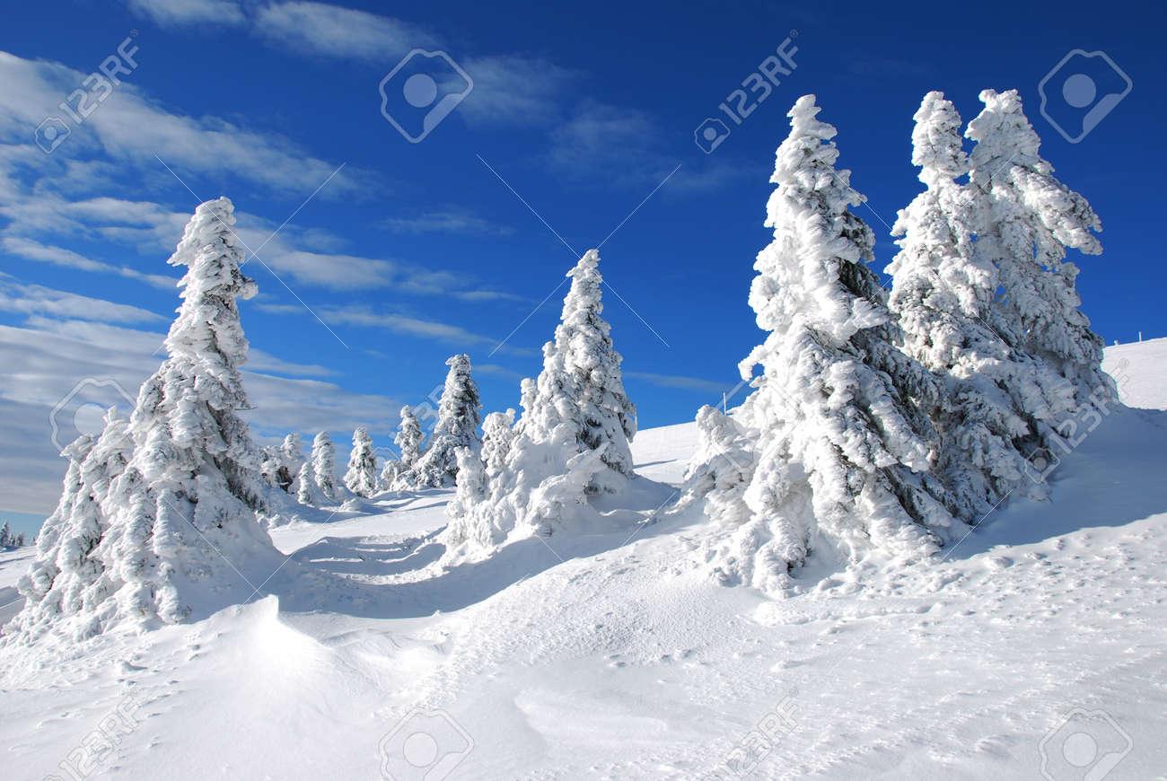 Winter trees under the snow - 17681847