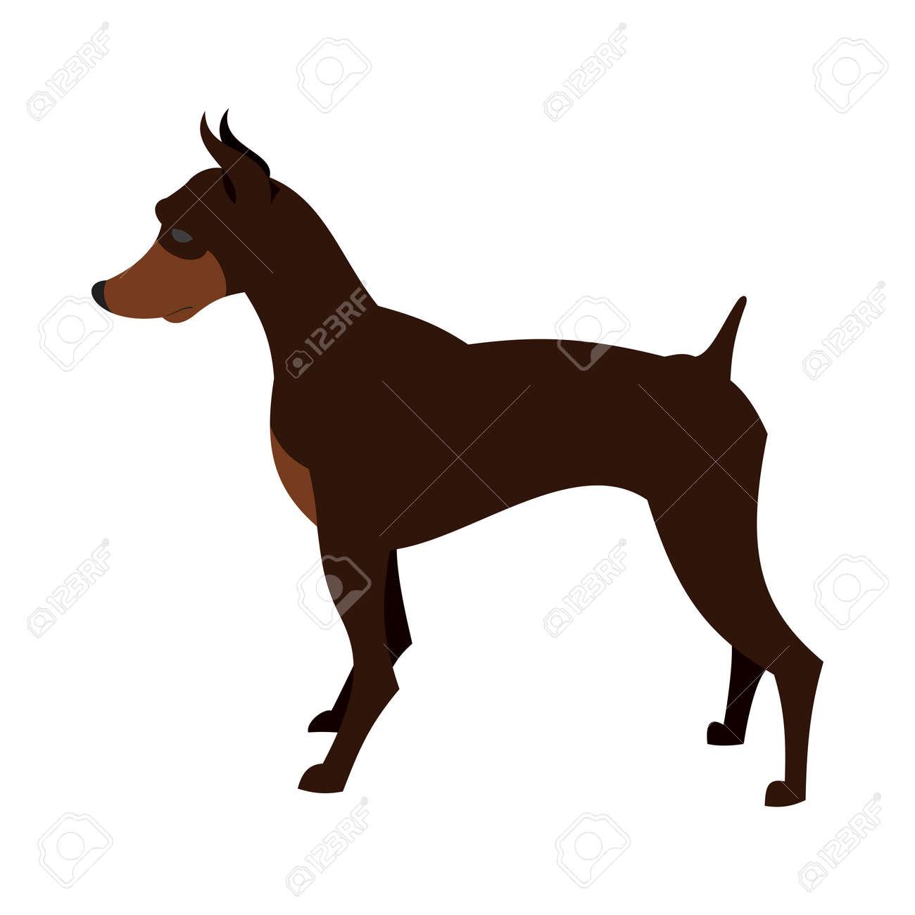Doberman Pinscher: photos, breed description 31