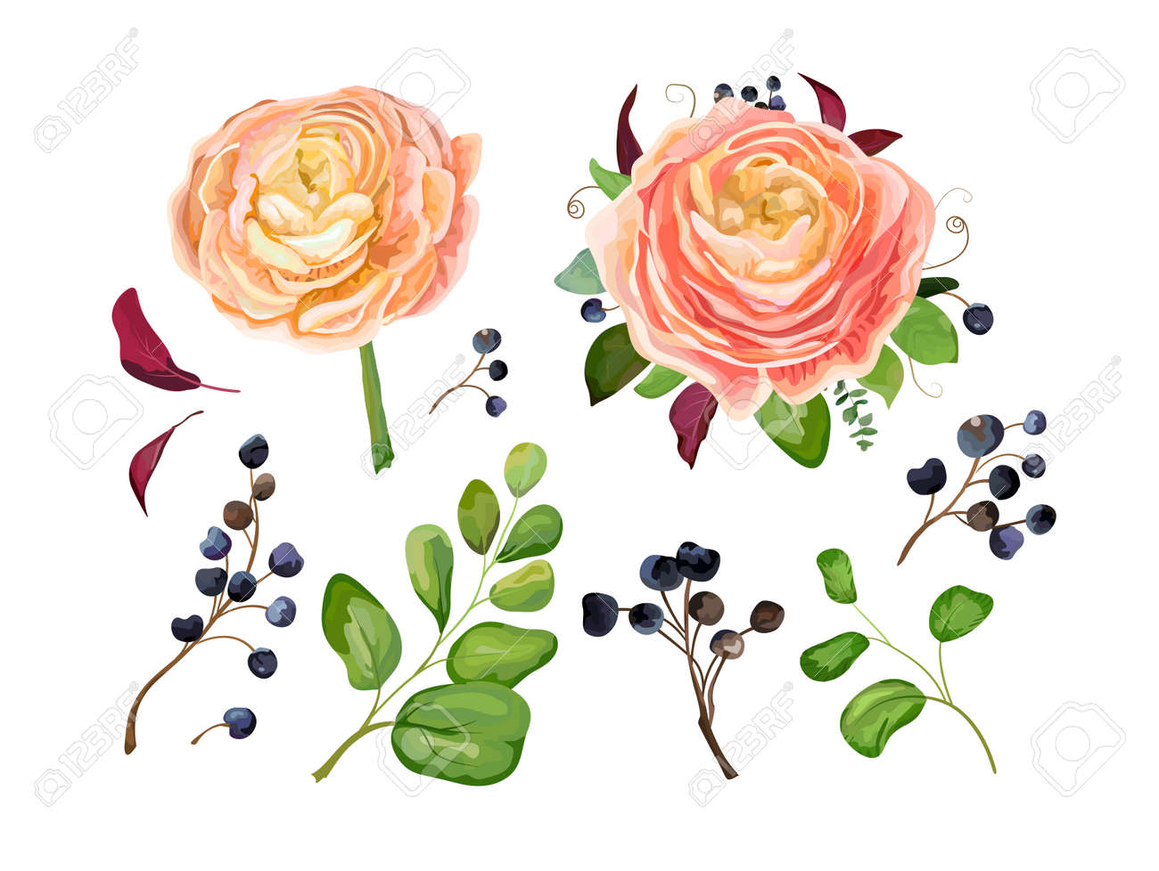 Vector floral big element set pink peach ranunculus flower bouquet vector vector floral big element set pink peach ranunculus flower bouquet blue berry branch forest fern tree fall leaves art foliage objects in mightylinksfo