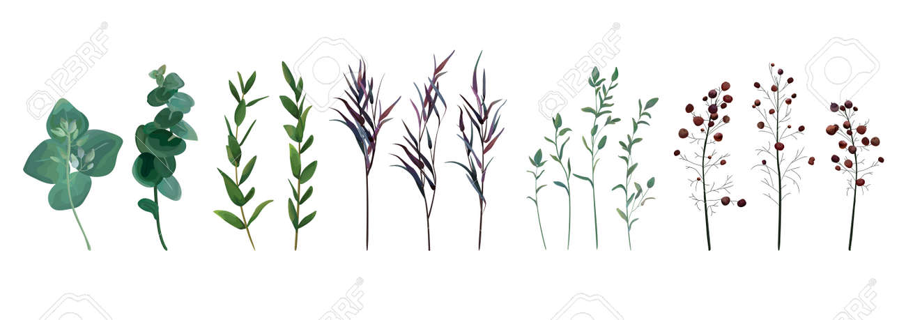 Eucalyptus seeded, blue agonis thyme, asparagus berry designer art watercolor foliage natural branches leaves elements set, collection. Vector decorative beautiful cute elegant illustration for design. - 92759428