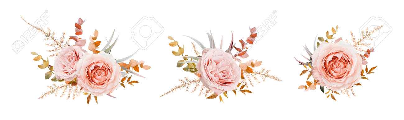 Vector floral bouquet design. Pink, blush peach Roses, fall, winter tones taupe, brown beige cream autumn Eucalyptus branch, leaves, fern. Wedding invite card decorative elegant watercolor element set - 167020152